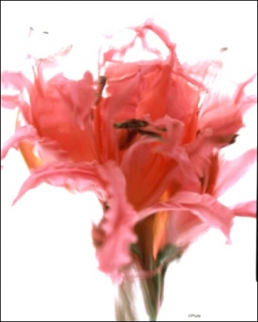 Madelyn Jordon Fine Art Everlasting Blooms: A Virtual Mother's Day Sale  10