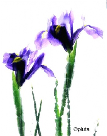 Madelyn Jordon Fine Art Everlasting Blooms: A Virtual Mother's Day Sale  3