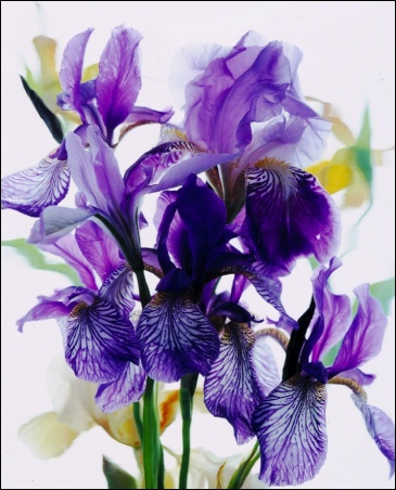 Madelyn Jordon Fine Art Everlasting Blooms: A Virtual Mother's Day Sale  7