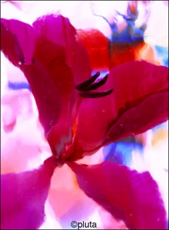 Madelyn Jordon Fine Art Everlasting Blooms: A Virtual Mother's Day Sale  8