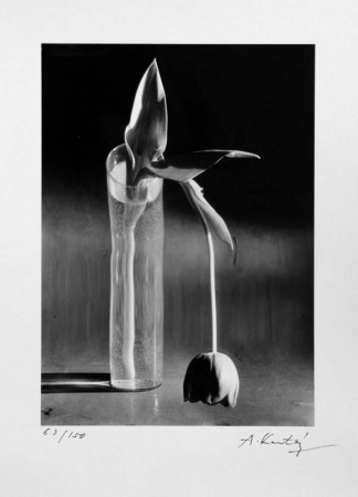 Madelyn Jordon Fine Art ANDRÉ KERTÉSZ & THEODORE FRIED: CONVERGING JOURNEYS IN THE MODERNIST AGE 22